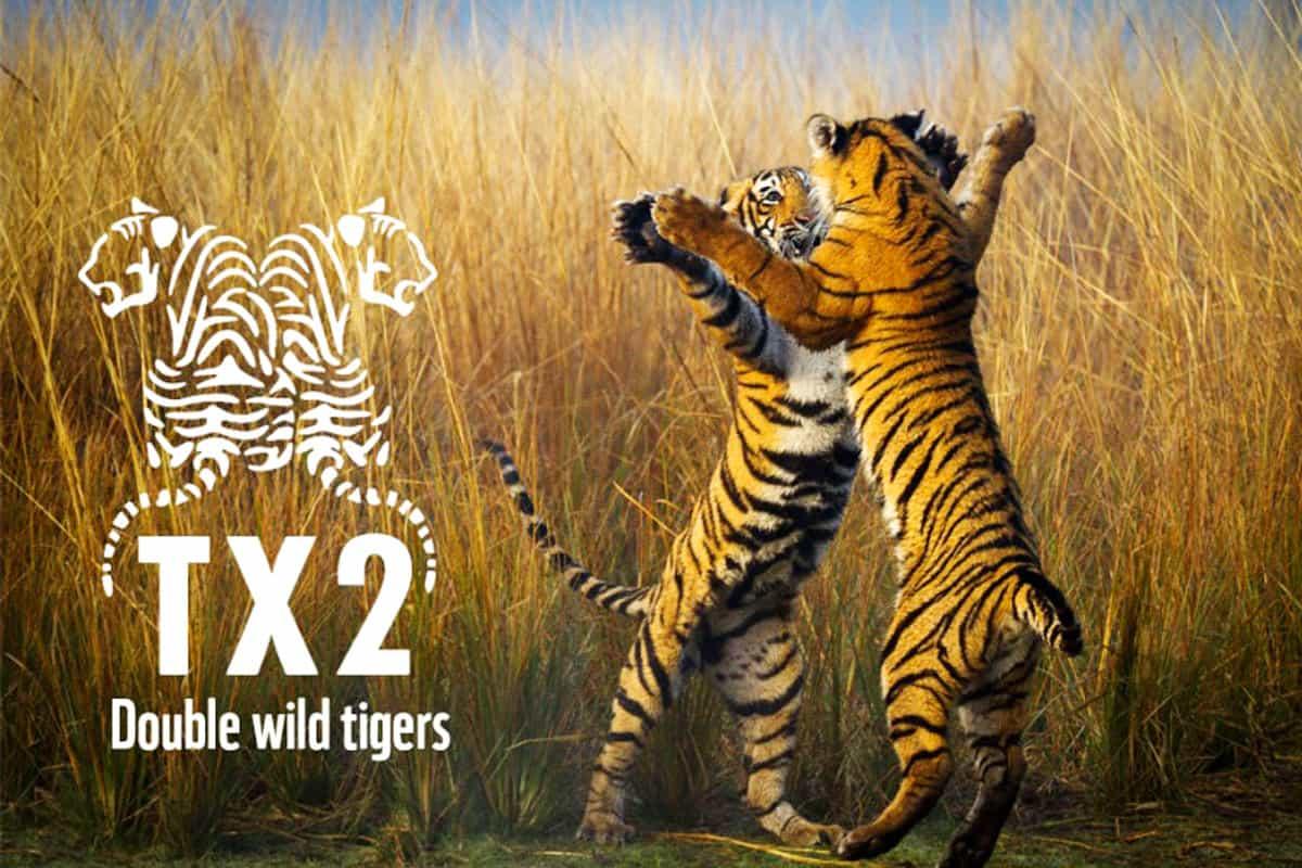 TX2 Tiger-Projekt: Freilebende Tiger bis 2022 verdoppeln