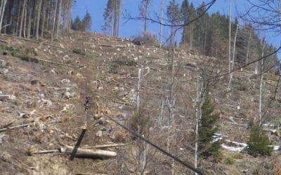 WWF fordert Aufklärung: Österreichische Holzkonzerne in Rumänien zu Millionenstrafen verurteilt