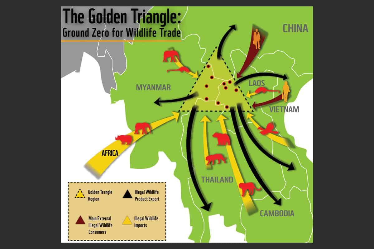 Das Goldene Dreieck des illegalen Wildtierhandels