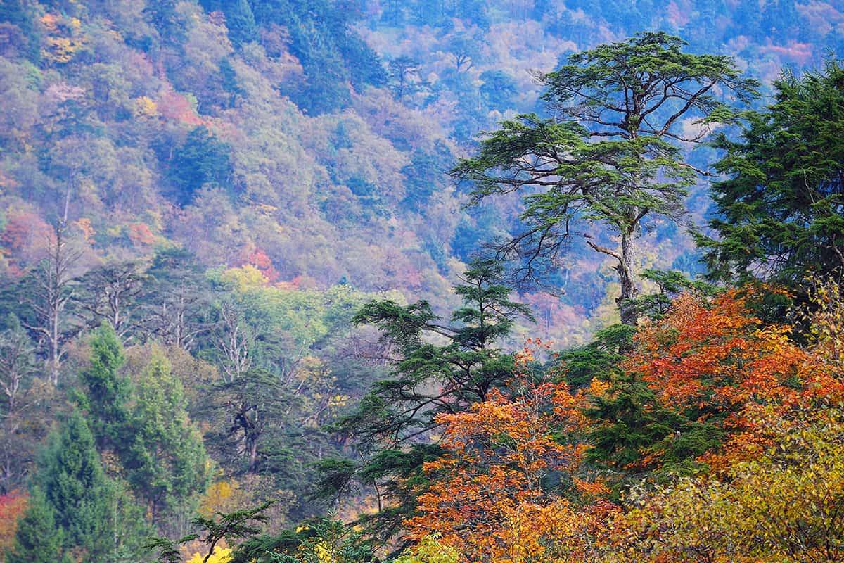 Herbstlicher Wald im Laba He Naturschutzgebiet, Sichuan, China