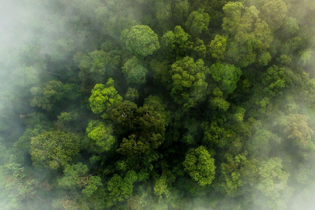 Regenwald Luftaufnahme in der Bukit Tigapuluh Landschaft Sumatra