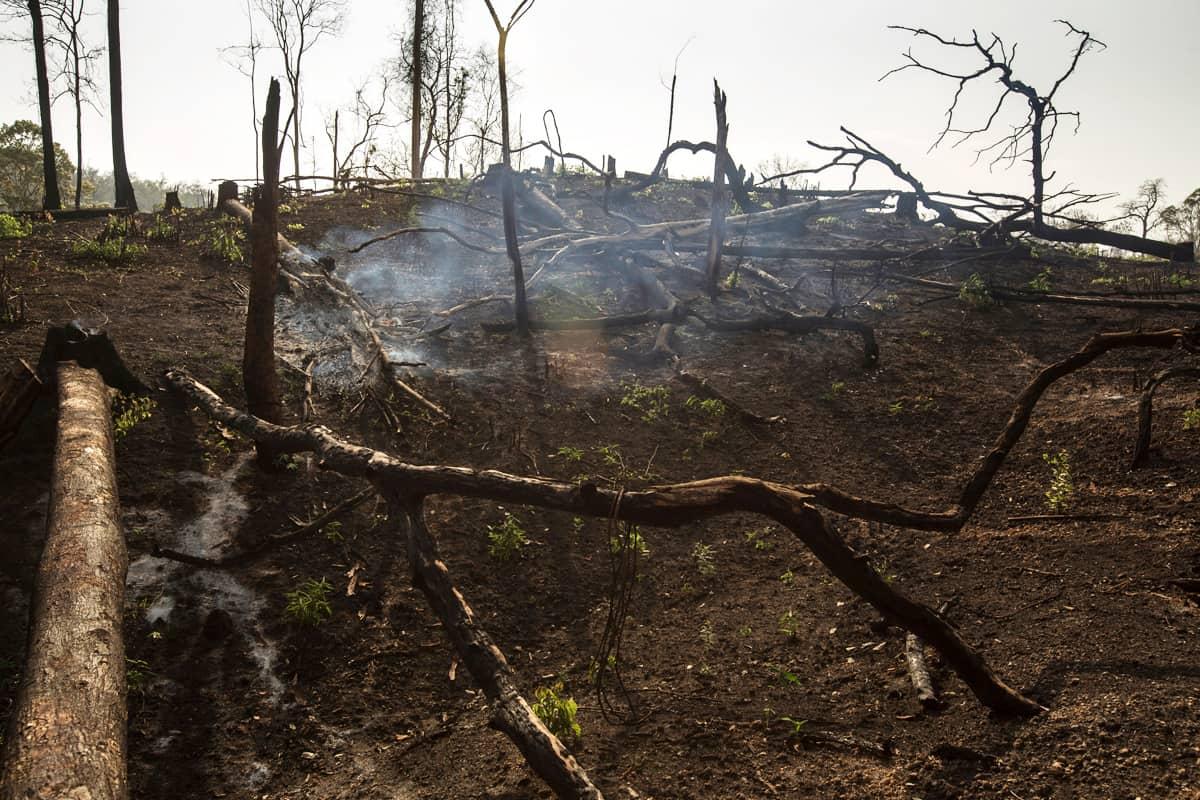 Verbrannter Wald für landwirtschaftliche Produktion (c) Minzayar Oo / WWF-Myanmar