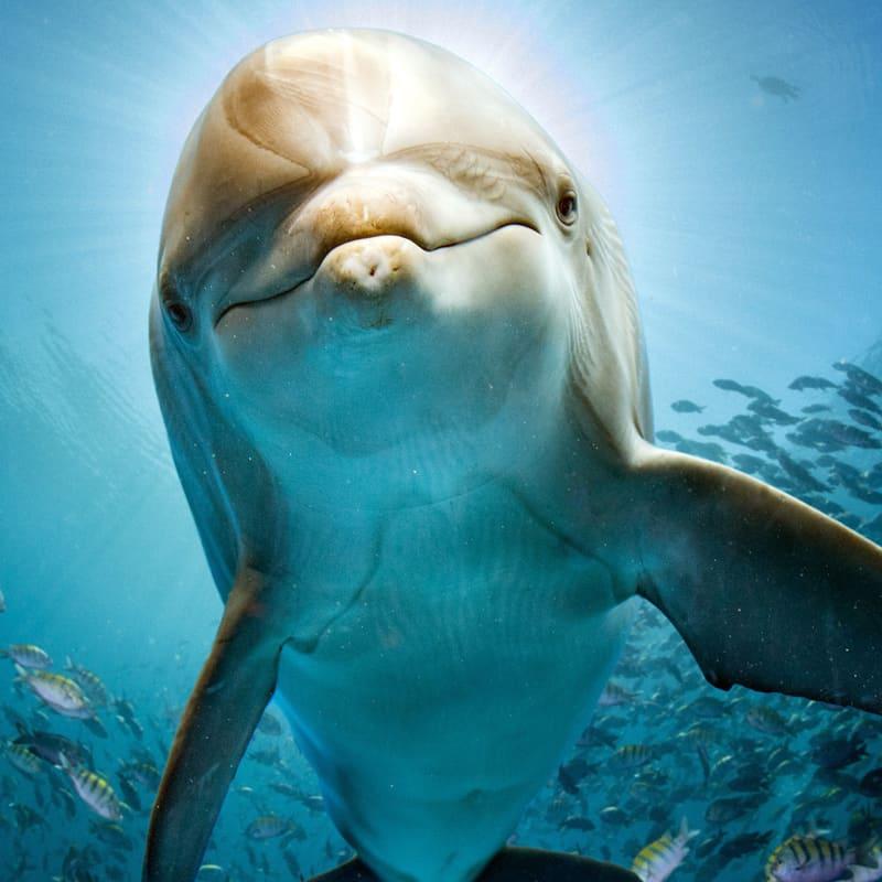 Unterwasseraufnahme eines Delphins