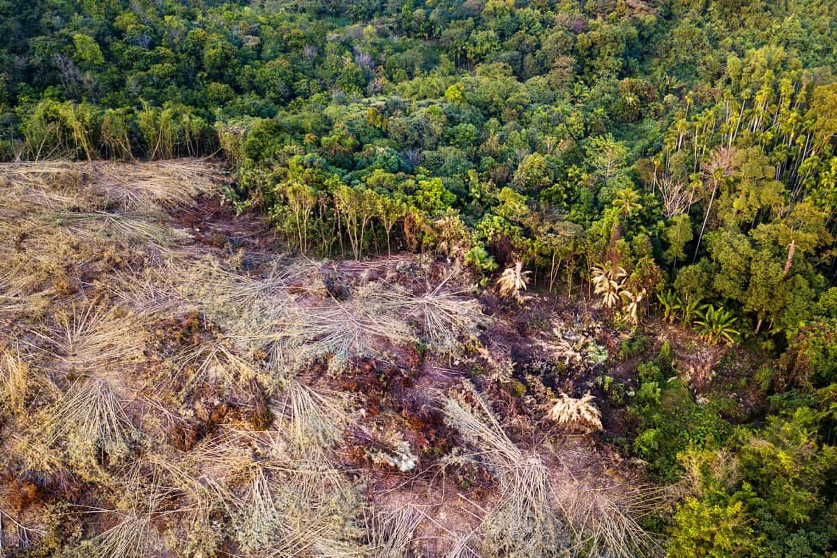 Wald in Myanmar weicht der Landwirtschaft