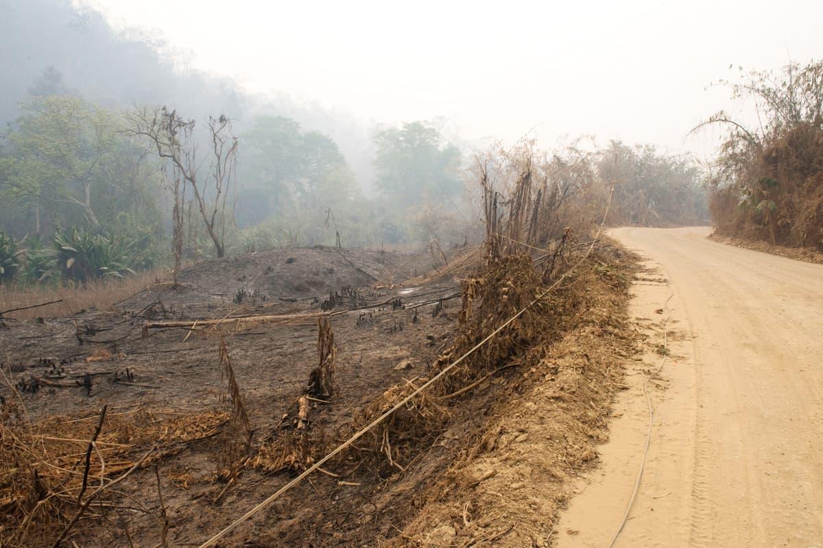 Wald in Myanmar muss für den Straßenbau weichen