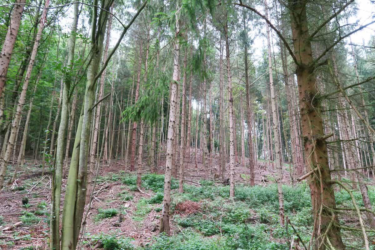 Wirtschaftswald Kamp
