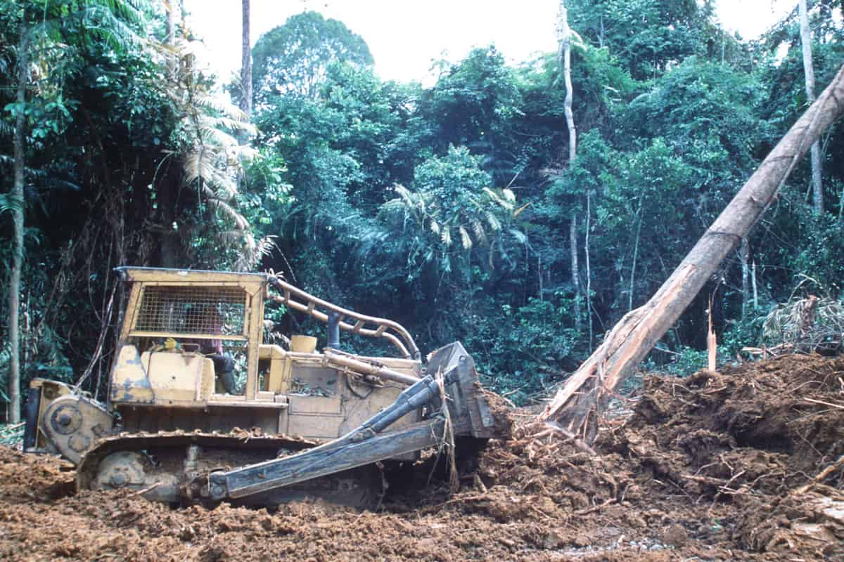 Bulldozer rodet Baeume um eine Straße - Gabun