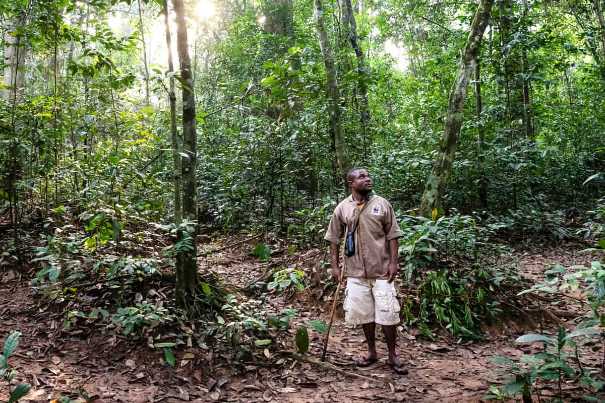 Ein Gorilla-Tracker auf der Spurensuche im Dzanga-Sangha-Waldreservat