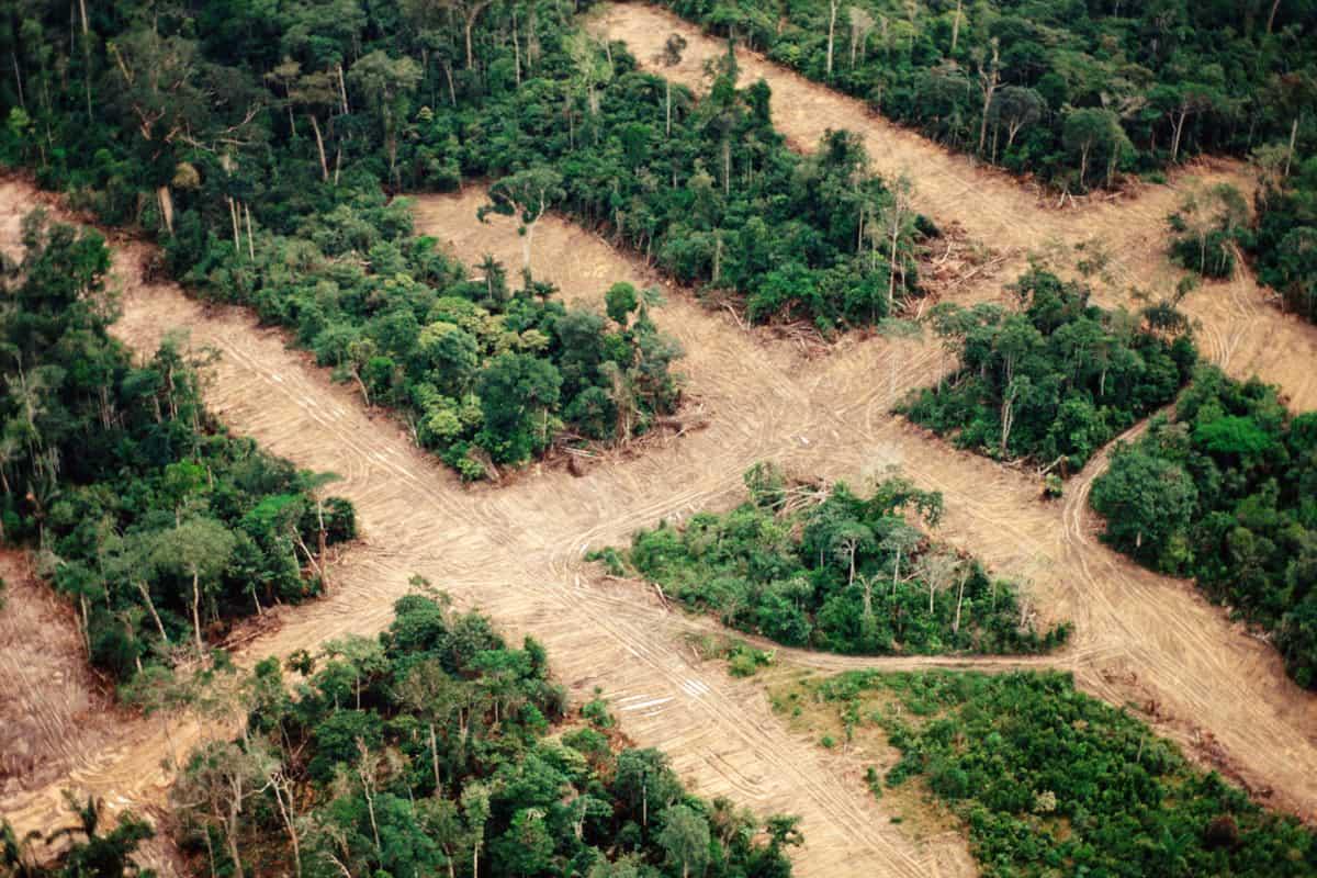 Luftaufnahme eines durchschnittenen Regenwald-Abschnitts im Amazonas