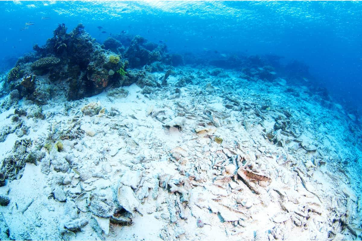 Degradierte Korallen