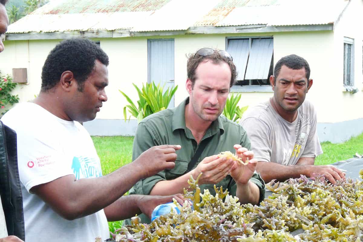 Die Ernte einer Algenfarm als alternative Einkommensquelle.