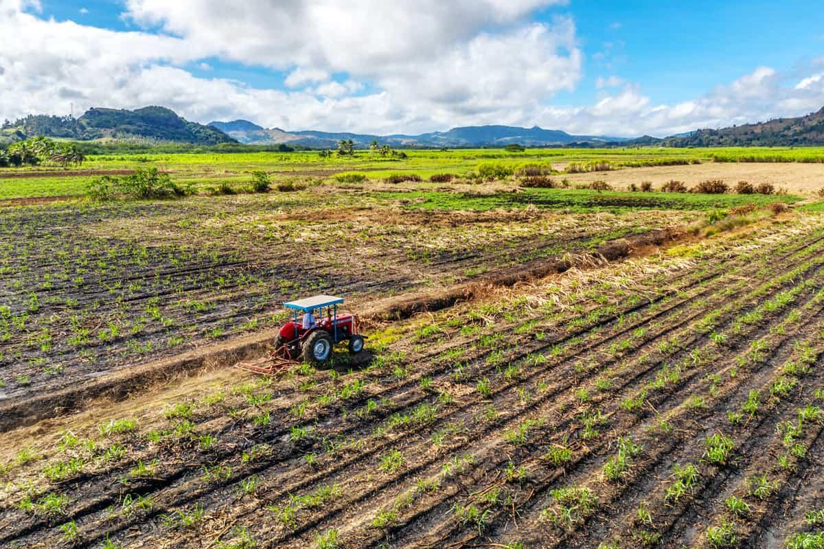 Ein lokaler Bauer bewirtschaftet sein Zuckerrohrfeld mit Traktor. Korova, Vanua Levu, Fiji.