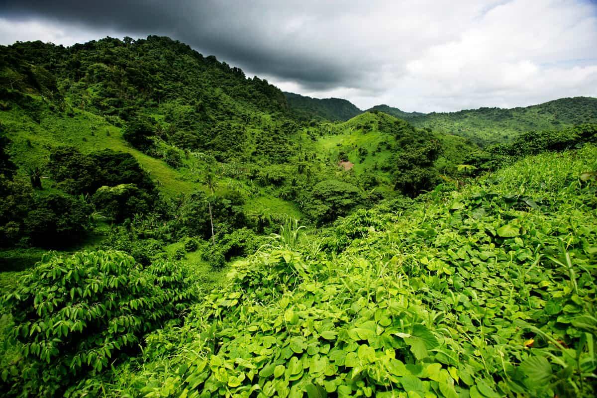 Grüne Landschaft auf den Fidschi-Inseln