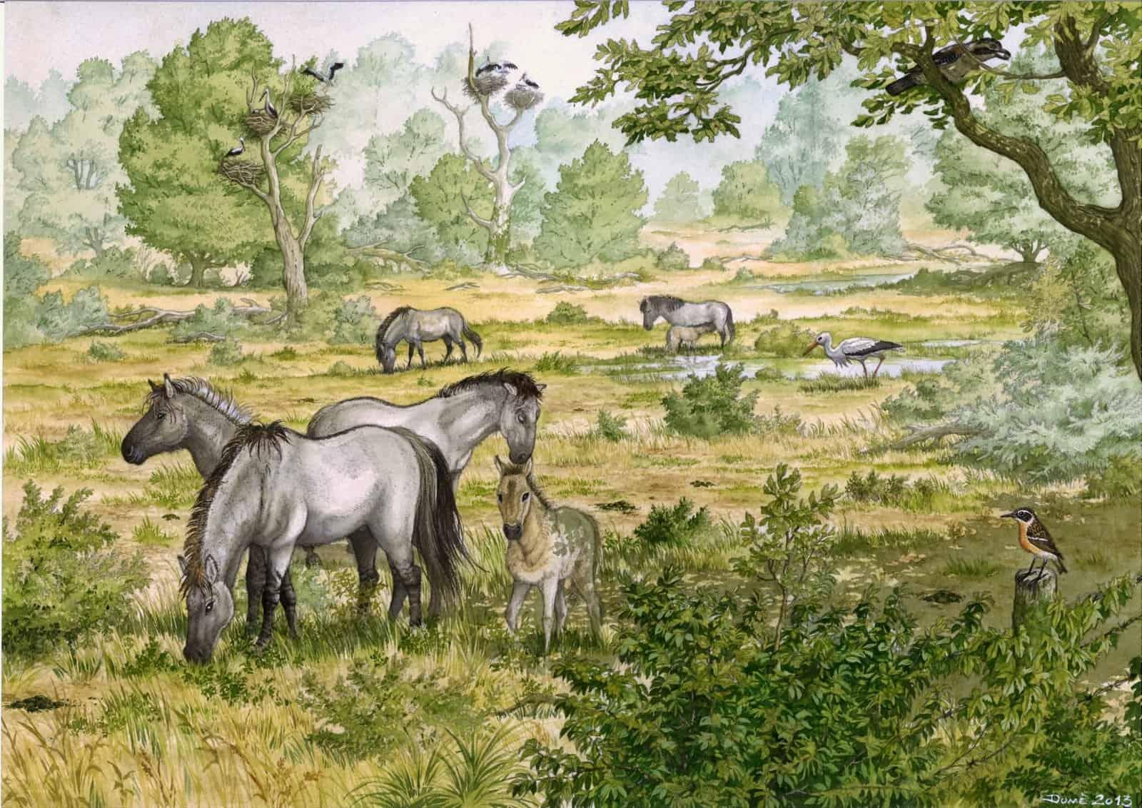 Pferdeweide Marchegg