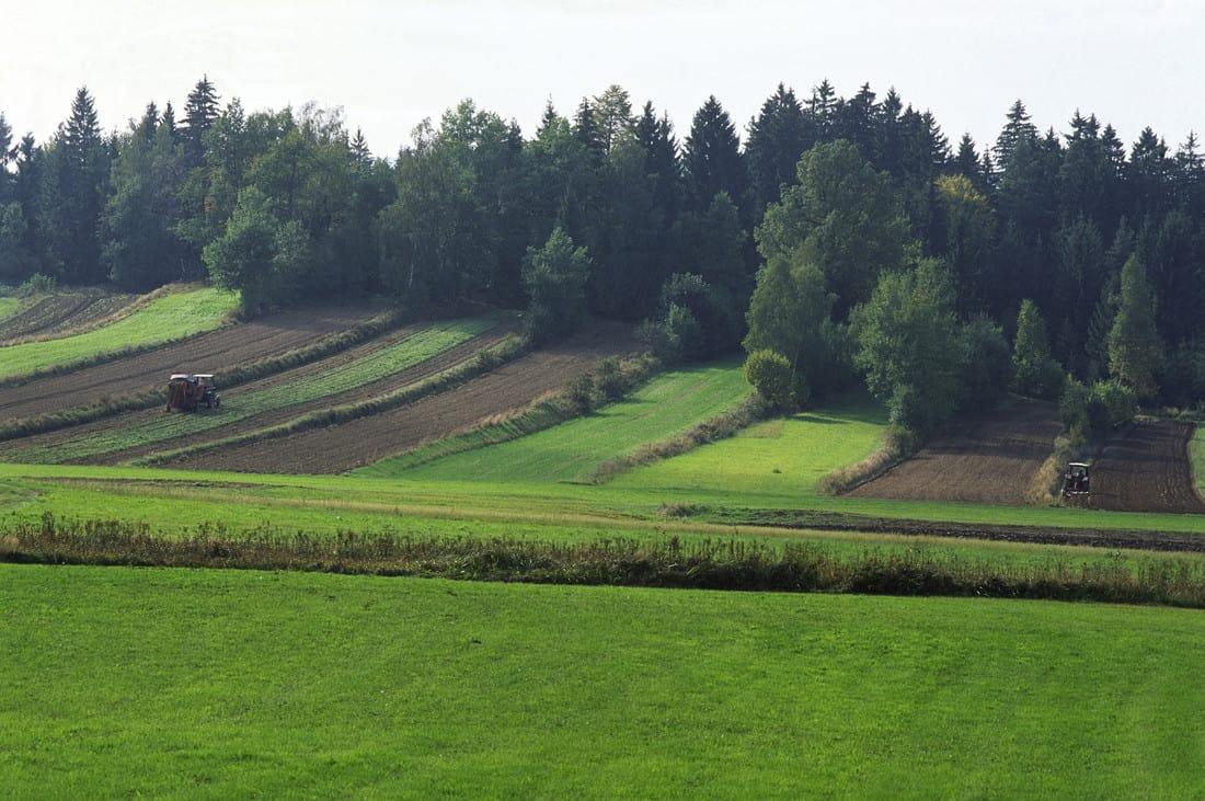 Felder und Wiesen im Waldviertel