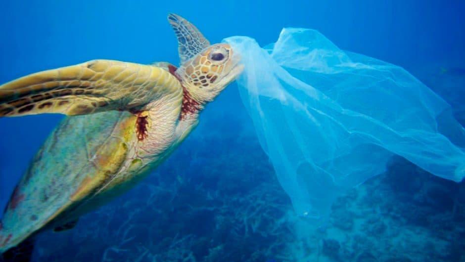 Mythos #8: Plastik ist das umweltschädlichste Verpackungsmaterial