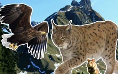 Vertrieben, verdrängt und verfolgt: 10 bedrohte Tierarten in Österreich