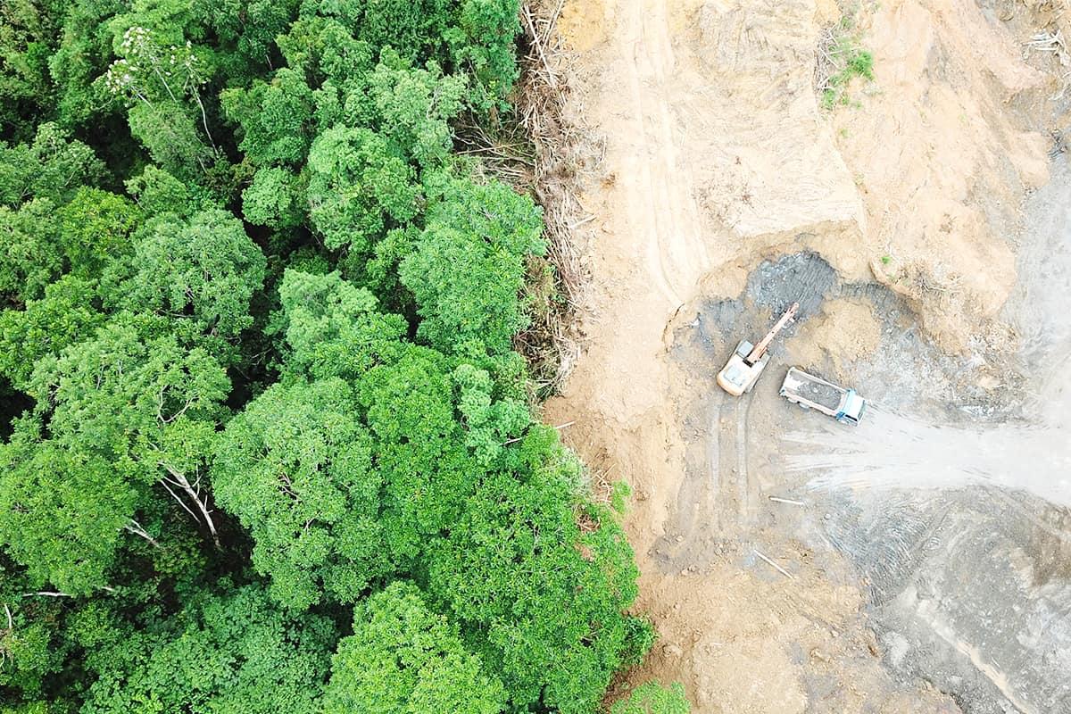 Deforestation Regenwald bei Borneo