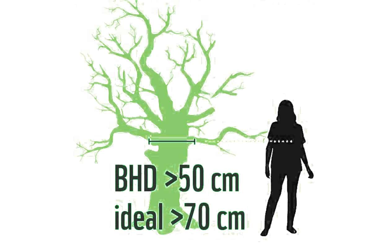 Biotopbaum Grafik