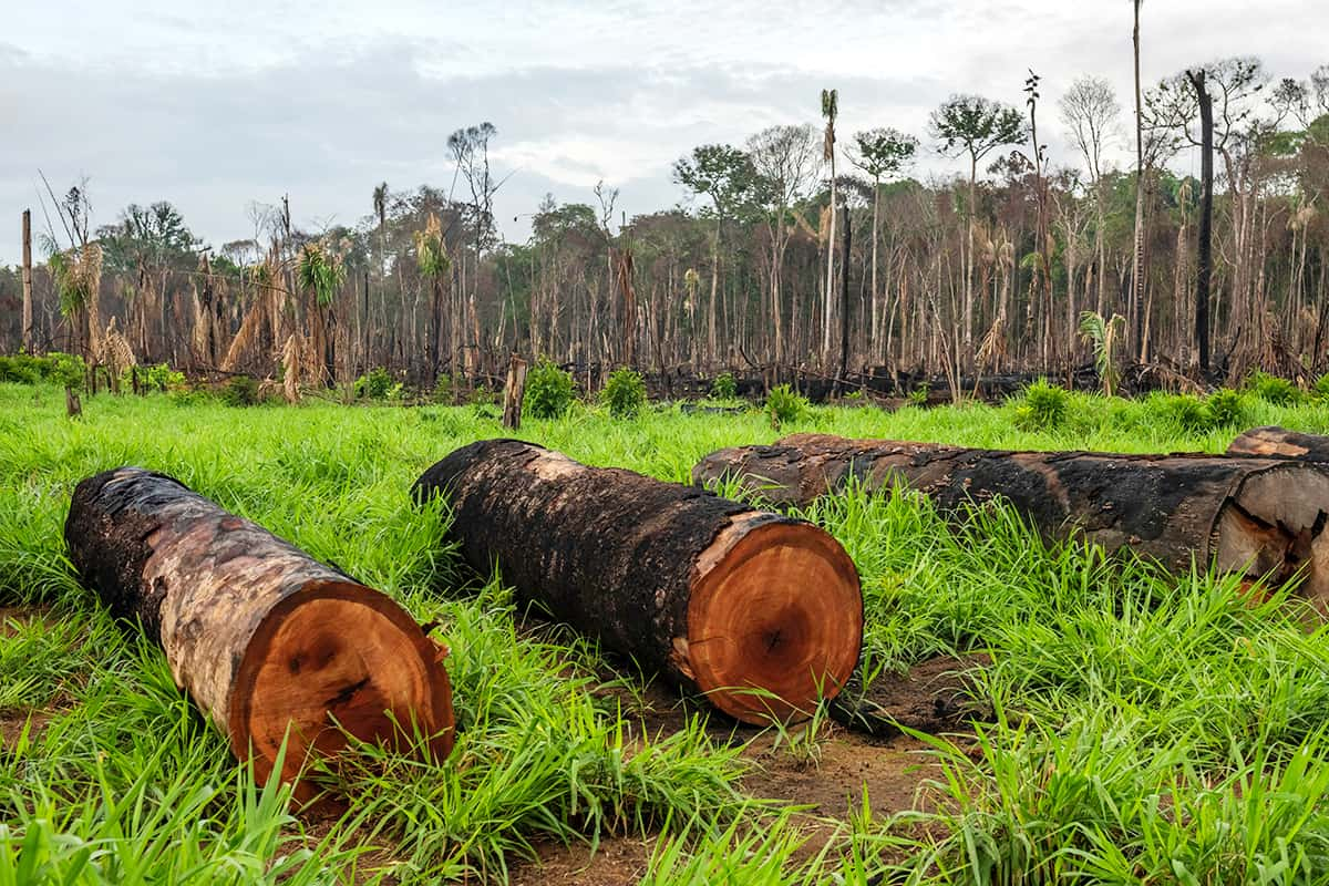Entwaldung im Amazonas in Maués