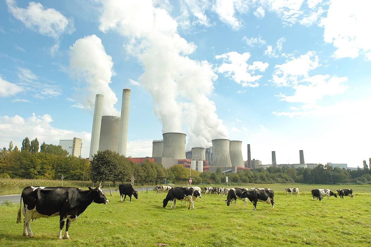 Kühe vor einem Kraftwerk