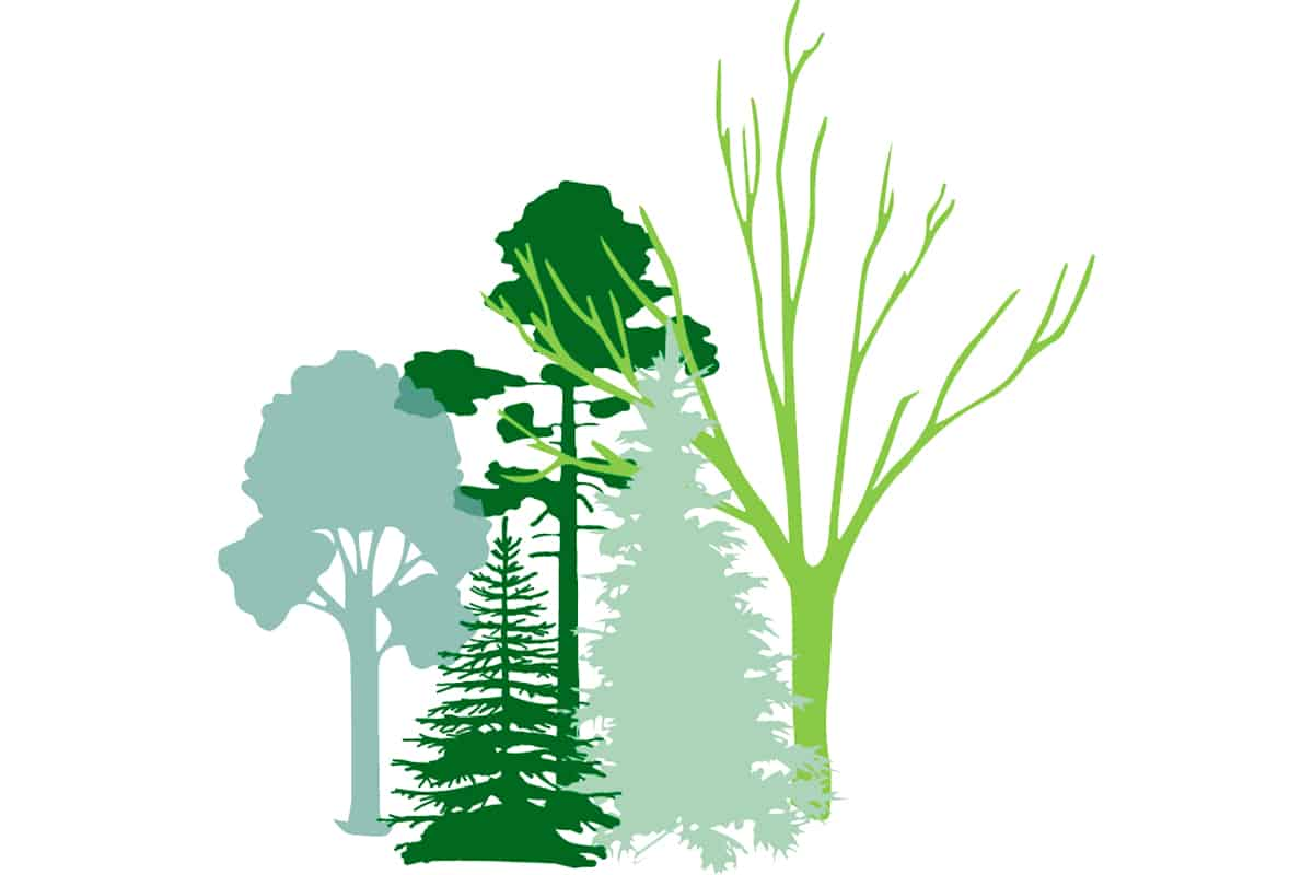 Grafik Wald