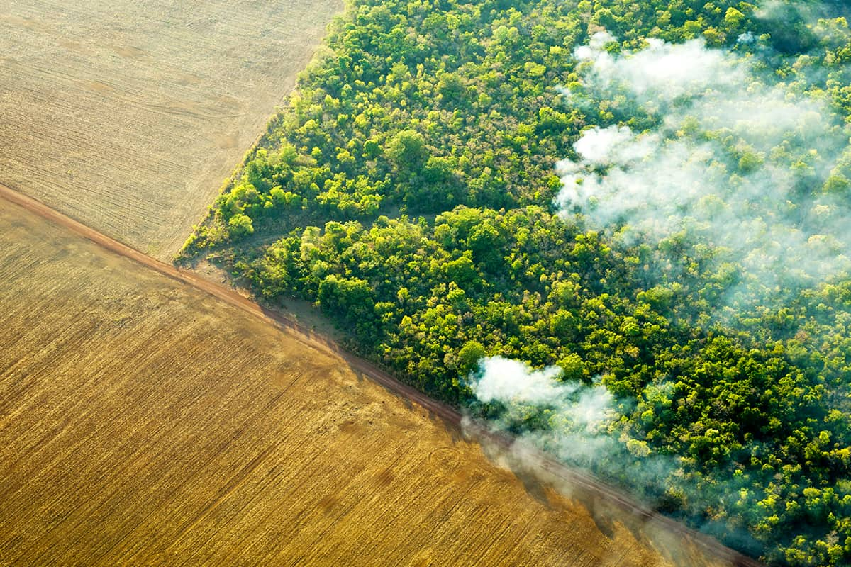 Ein unkontrollierter Waldbrand bei Feldern in Brasilien