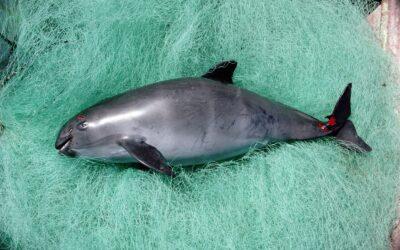 WWF-Bericht: Über eine Million Meeressäuger, Schildkröten und Seevögel sterben jährlich als Fischerei-Beifang