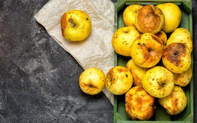 Weltweit werden über 930 Millionen Tonnen verkaufte Lebensmittel verschwendet