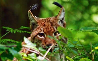 Nach Landesrechnungshof-Bericht: Naturschutz-Allianz fordert Reformen im Nationalpark Kalkalpen