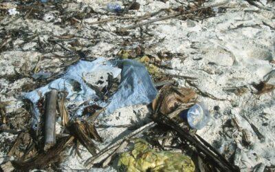 WWF Report: Mittelmeer geht in Plastik baden