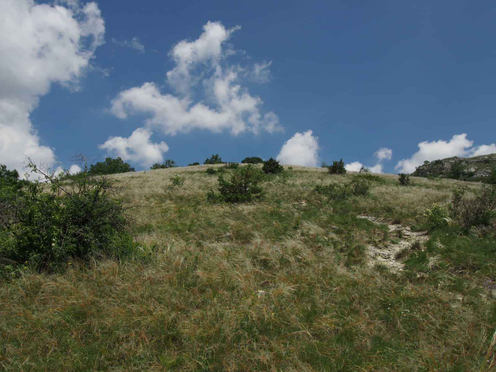 Das Schutzgebiet am Hundsheimer Berg
