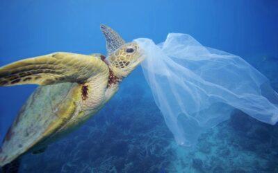 WWF: Interaktive Weltkarte zeigt massive Plastikverschmutzung der Ozeane