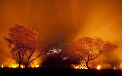 WWF-Regenwald-Report: Fünffache Fläche Österreichs vernichtet