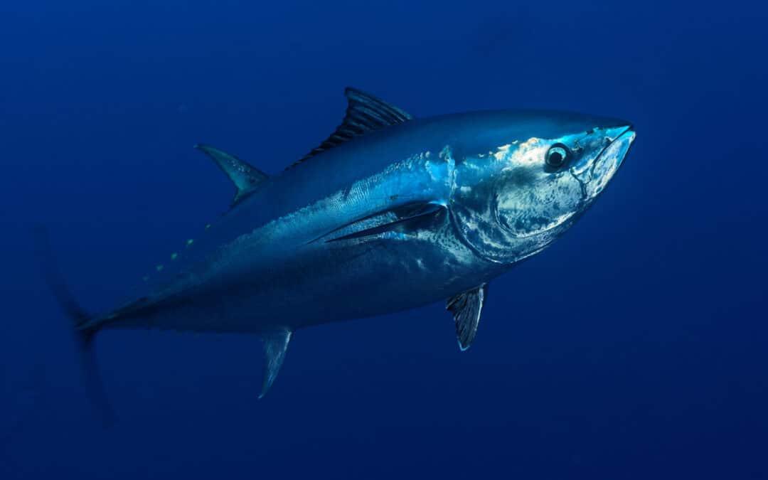 Große Fische im Kampf gegen die Klimakrise