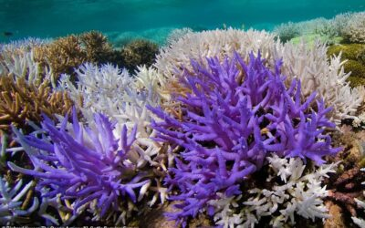 Bunter Tod. Wenn Korallen sterben