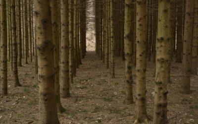 Österreichs Wälder sind in der Krise