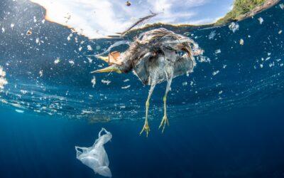 Zwei Millionen Menschen fordern globales Abkommen gegen die Plastikkrise