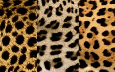 Bilderquiz: Fellmuster der Tiere