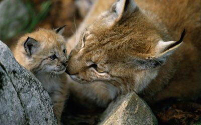 Tag der biologischen Vielfalt: WWF fordert Rettungspaket für bedrohte Arten