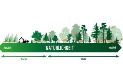 WWF zum Tag des Waldes: 9 von 10 Wäldern in Österreich sind zu stark bewirtschaftet