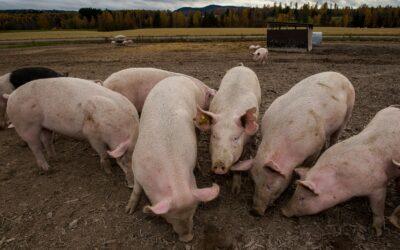 WWF fordert bessere Kennzeichnung von Osterschinken