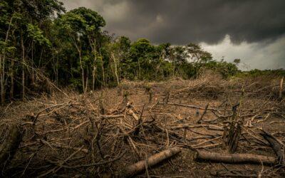 Neuer WWF-Report: EU für 16 Prozent der globalen Regenwald-Zerstörung verantwortlich