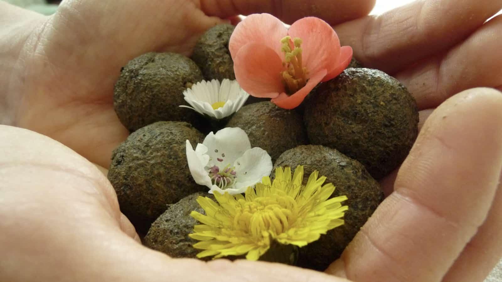 So sehen deine fertigen Samenbomben aus!