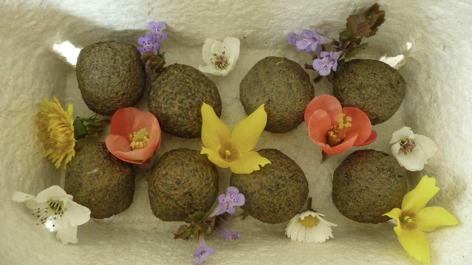 Zum Trocknen werden die Knödel auf Karton, zum Beispiel in einen Eierkarton, gelegt