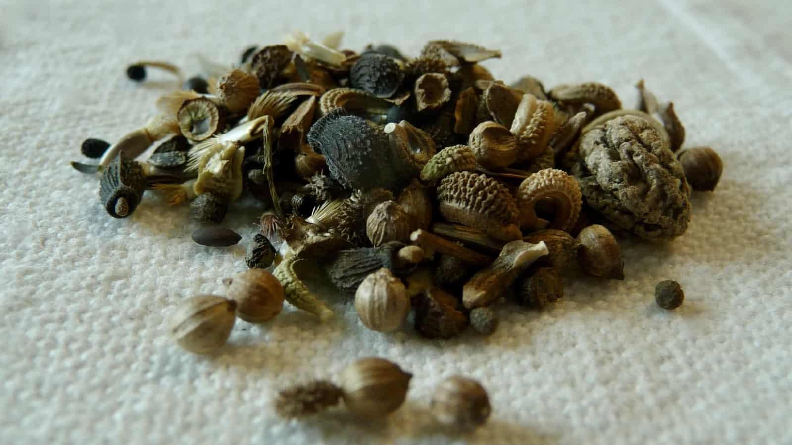 Verwendet heimische Samen und achtet darauf, sie zur jeweils passenden Zeit auszusäen.