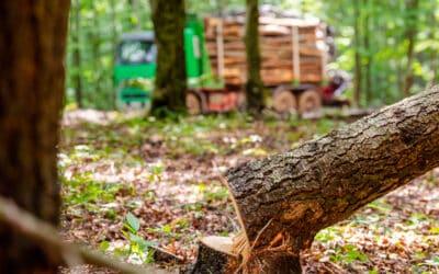 Illegaler Holzhandel: WWF Österreich reicht EU-Beschwerde ein