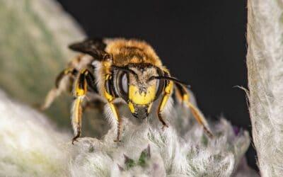 Bild der Woche: Der Biene droht der Untergang!
