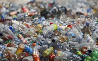 Abfallwirtschaftsgesetz: WWF fordert stärkeren Mehrweg-Ausbau und Pfandsystem
