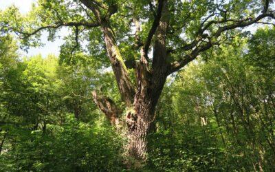 WWF unterzeichnet Baumkonvention – Präventivschläge gefährden Artenvielfalt